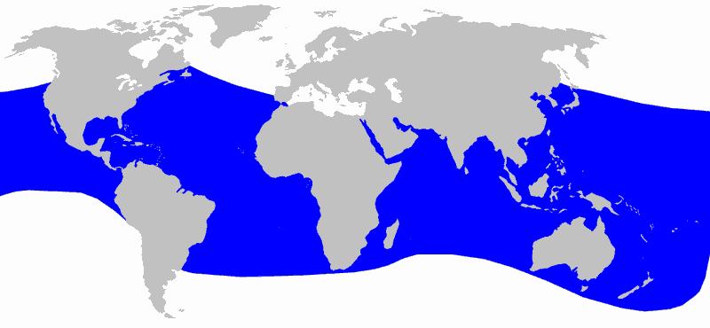 Blainville-Schnabelwal Mesoplodon densirostris Verbreitung Vorkommen Karte