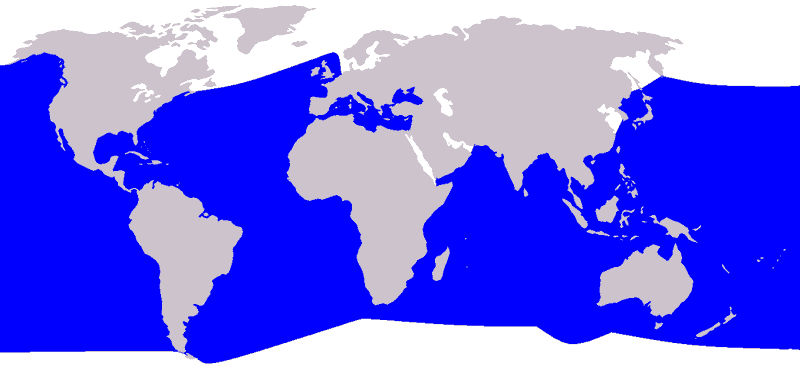 Cuvier-Schnabelwal Ziphius cavirostris Karte Verbreitung Vorkommen