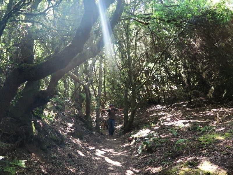 El Hierro wandern original wanderung links bild sl eh 1 regenwald kanaren kanarische inseln 2