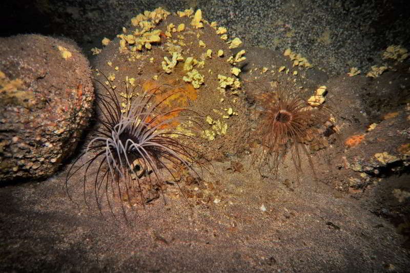 Cueva Diablo Zylinderrosen el hierro tauchen marine reservar mar de las calmas