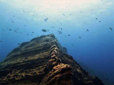 El Bajon tauchen El Hierro Kanaren Vulkan krater fisch bild