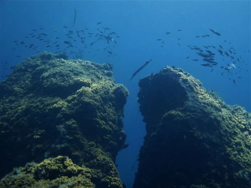 Tacoron Tauchplatz tauchen el hierre marine reservat mar de las calmas lavafels formation naturschwimmbecken meerpfauen trompetenfische