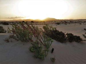 Fuerteventura Sehenswürdigkeiten Dünen Corralejo