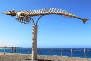 Fuerteventura Sehenswürdigkeiten Walskelett Urlaub Kanarische Inseln