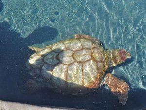 Schildkrötenrettungsstation Fuerteventura morro jable sehenswürdigkeiten