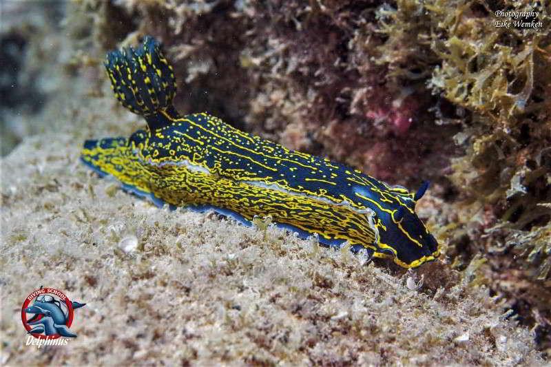 Tauchen Fuerteventura tauchcenter tauchbasen tauchplätze urlaub tauchurlaub kanaren kanarische inseln kantabrische sternschnecke delphinus