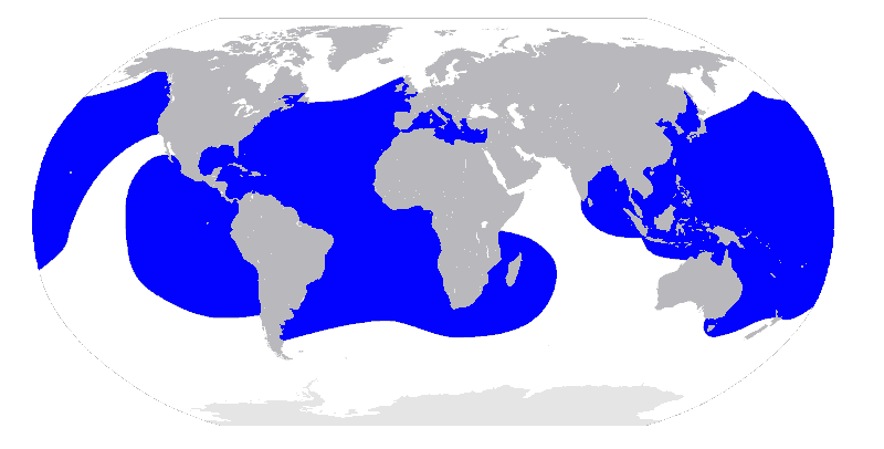 Lederschildkröte Dermochelys coriacea tauchen kanaren kanarische inseln atlantik Ozean Mittelmeer Karte Verbreitung