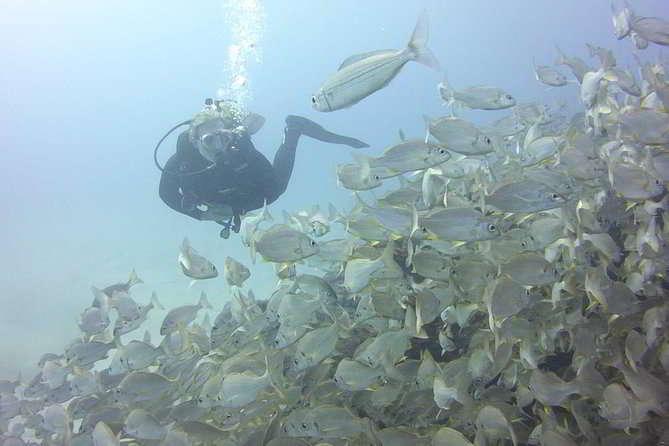 Ocean Trek Kanaren tauchen lernen Teneriffa Schnuppertauchen Kurs Anfänger DSD PADI buchen OWD